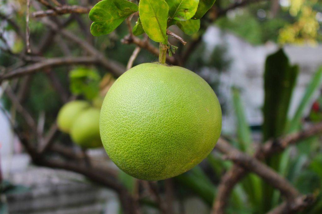 Il pomelo tra leggerezza e benefici per la salute